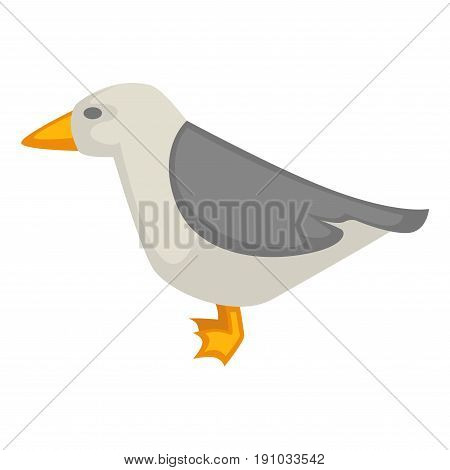 Seagull isolated on white vector colorful graphic illustration in flat design. Side view of standing small animal that can fly with yellow beak and legs, with grey wings. Summer bird living on sea