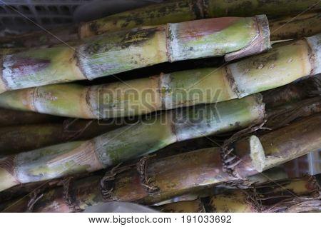 Fresh sugar cane , Concept nature , Raw material for sugar