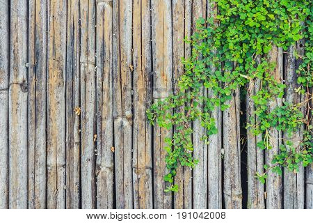 bamboo wood fence with green vine foilage