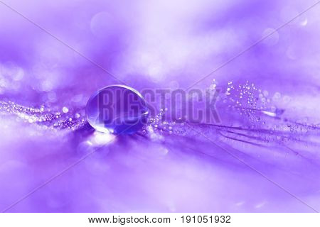 Feathers with a drop of water with a nice purple color.Macro feather