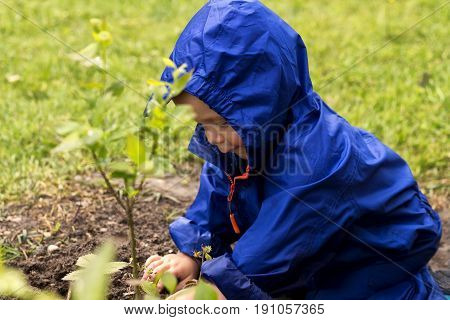 Young Gardener Siiting On Backyard And Playing With A Plants. Cute Baby Boy In A Blue Raincoat Sitti