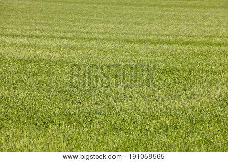 Green field in the countryside. Nature background landscape. Agriculture farmland