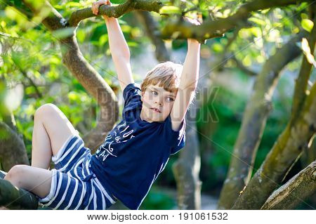 Little blond kid boy of 5 years climbing in tree in summer. Active child having fun in forest and nature. Boy having adventure on warm sunny day.