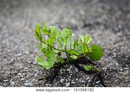 a plant grown from under the asphalt road