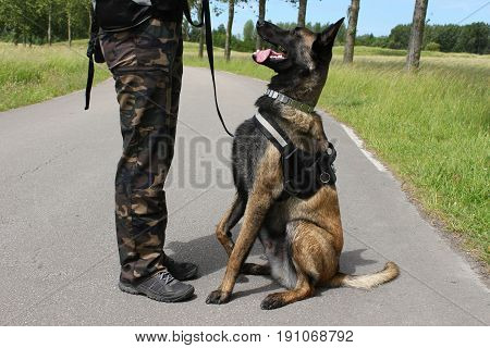 A Belgian shepherd Malinois military dog listening to his maitre in a sitting position
