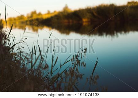 Green grass on the background of the river