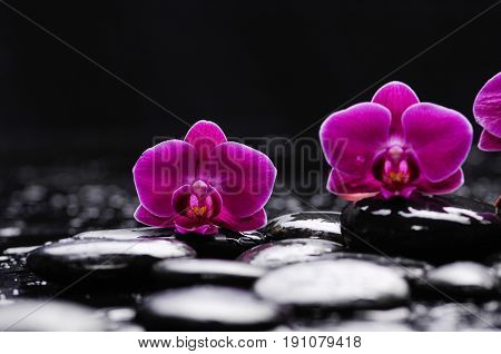 Beautiful red orchid and therapy stones