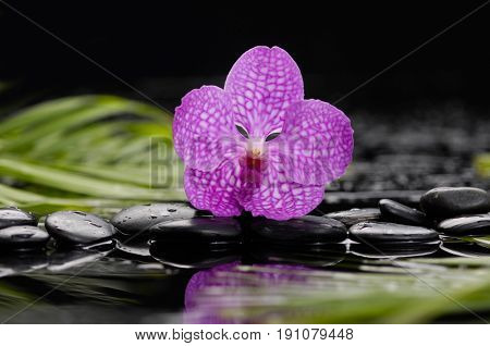 Beautiful orchid ,leaf and therapy stones