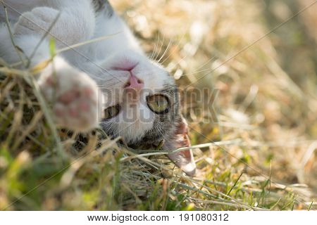 Cute funny cat playing outdoor. Playful cat.