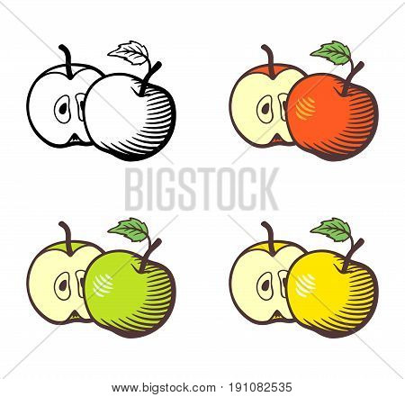 Set of apples. Whole apple with stem and leaf and cross section with seeds. Red yellow green apples and outline version. Stylized vector illustration isolated on white