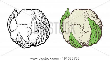 Stylized illustration of cauliflower. Vector isolated on white. Outline and colored version
