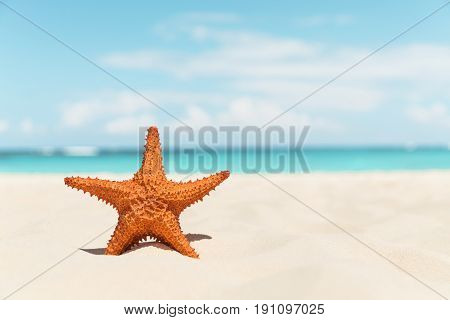 Starfish on the white sandy beach, summer background
