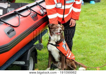 Beaulieu, Hampshire, Uk - May 29 2017: Dog And Its Handler Belonging To The Hampshire Search And Res