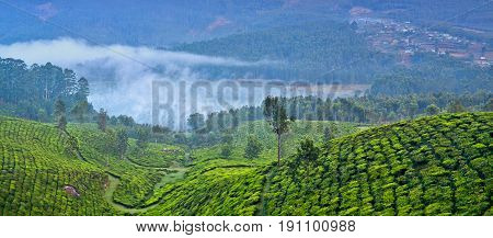 Panorama of tea plantations in Munnar, Kerala, South India. Munnar is situated at around 1600 metres above sea level in the Western Ghats range of mountains.