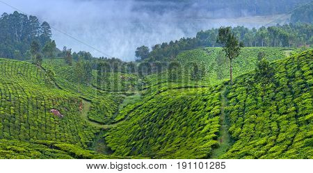 Panorama Of Tea Plantations And Mountain Landscape In Munnar, Kerala, South India