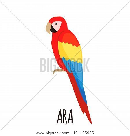 Cute Ara parrot in flat style isolated on whute background. Bird of Amazonian forests. Fauna of South America. Zoo bird. Vector illustration.