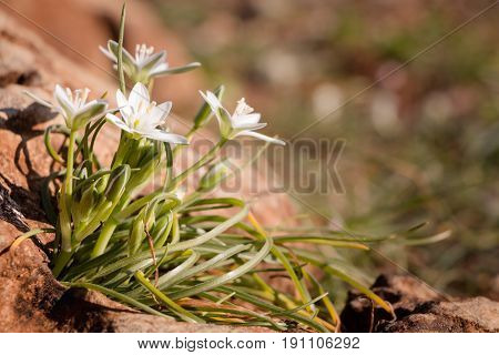 Summer Time Background With White Whildflowers On Rock.