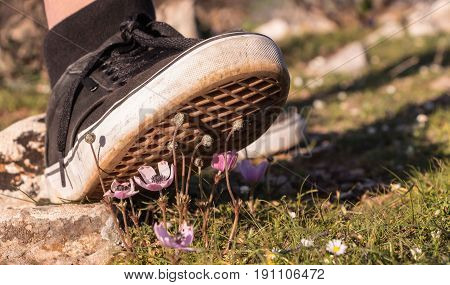 Foot Stepping On Tiny White Yellow Daisies On Green Field.