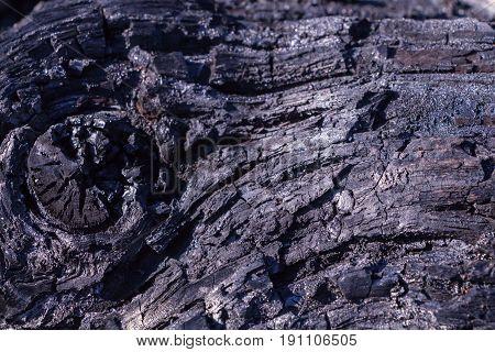 Burnt tree trunk surface closeup background /texture.