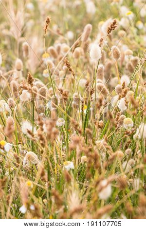 Various Wild Grass Plants On The Field.