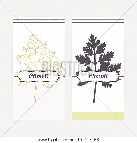 Chervil seasoning. Hand drawn branch with leaves in outline and silhouette style. Spicy herbs retro labels collection for food packaging or kitchen design. Vector illustration