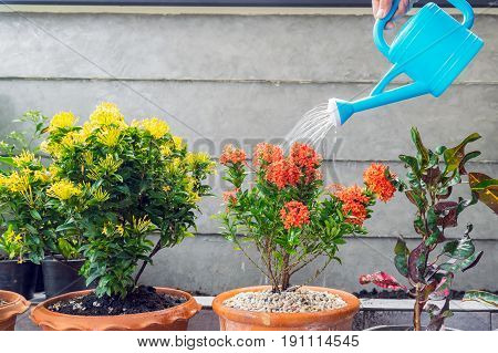 Watering flowers with a plastic watering can.