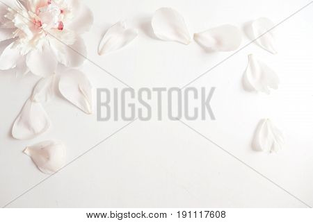 Wedding styled stock photography with peony flower head and petals lying on white background. Flat lay composition. Empty space for your text, beautiful blank card or birthday invitation.