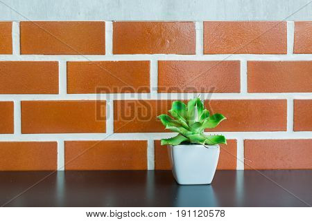 Blooming Tiny Green Cactus Plant in White pot on Wooden Shelf with Brick Wall Background Vintage Style. Copyspace for Text insert