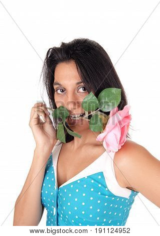 A lovely Hispanic woman in a blue dress with a pink rose in her mouth looking into the camera isolated for white background.
