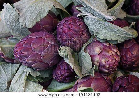 Purple Fresh Globe Artichokes On Market Display