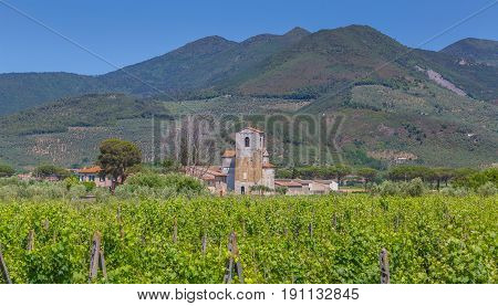 Winery with vineyards in Tuscany Italy Picture