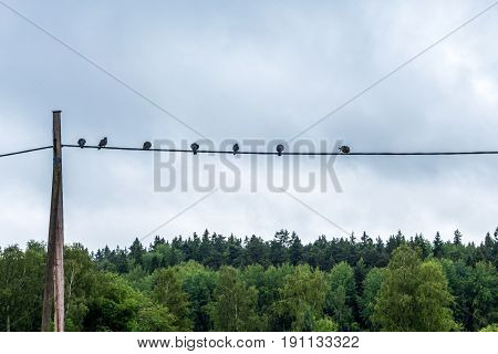 Calm landscape view of birds sitting on a telegraph wire with sky and forest in the background.