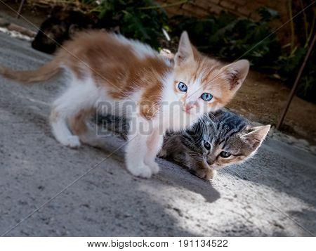 Dos gatos pequeños, uno de ojos azules