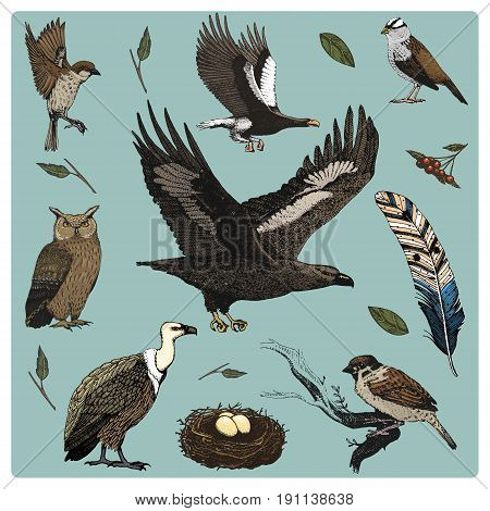 hand drawn vector realistic bird, sketch graphic style, set of domestic. griffon vultures and owl. dove and sparrow. raven and feather. Nest with eggs