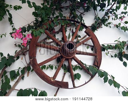 old cartwheel on a whitewashed wall in rhodes greece with trailing plants and flowers