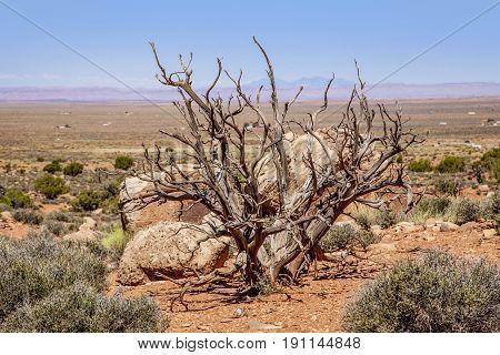 A dead tree in the Utah desert