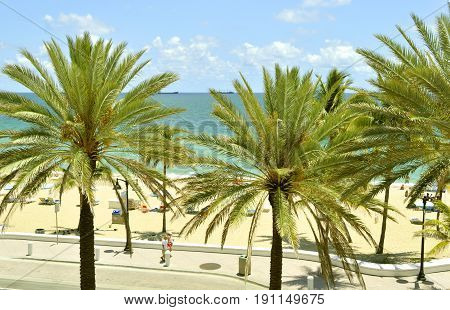 Fort Lauderdale Beach Florida USA - May 16 2017 : Palm trees on Fort Lauderdale Beach
