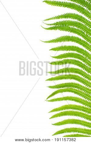 Fragment Of A Fern Leaf Close-up On The Right On A White Background..