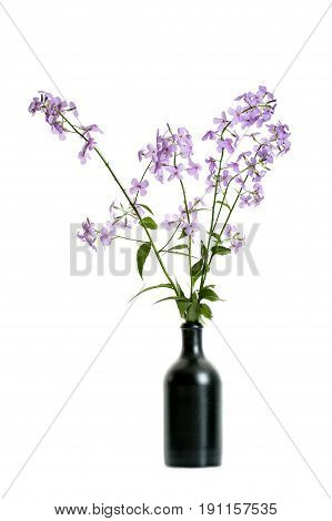 Branches Of Flowering Hesperes In A Black Ceramic Vase On A White Background..