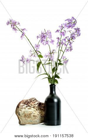 Branches Of Flowering Hesperes (night Violet) Lilac In A Black Ceramic Vase On A White Background..