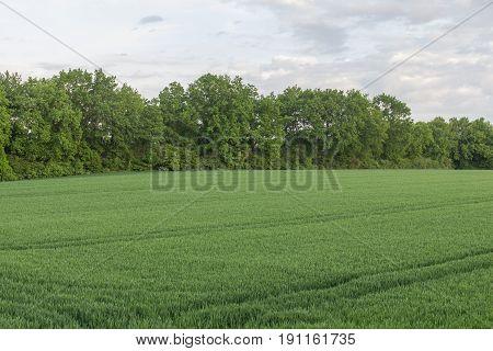 fields - summer landscsape next to schwandorf in bavaria
