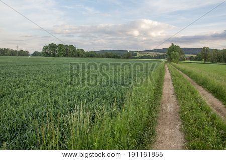a country road in a summer landscape next to Schwandorf in Bavaria