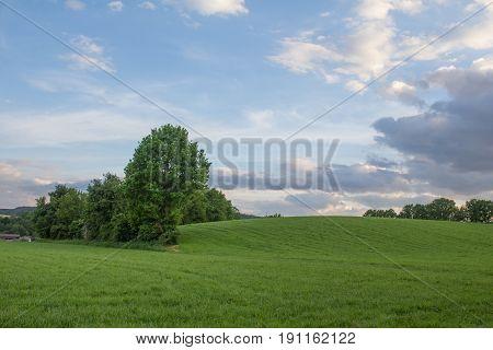 fields - summer landscsape next to schwandorf in bavaria at sundown