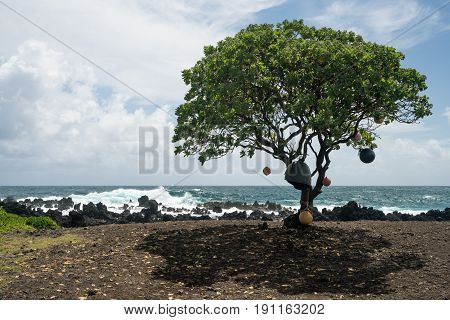Single tree hung with boat bumpers by black lava rocks on the shore at Keanae on the road to Hana in Maui, Hawaii
