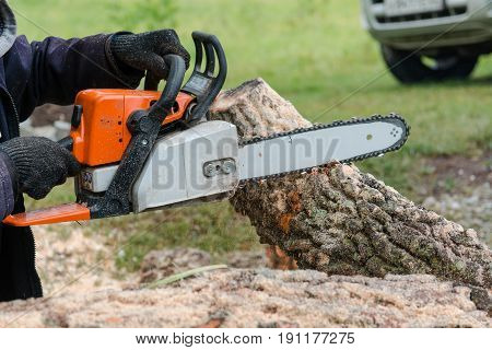 To Saw A Tree Gasoline Saw. The Man Saws A Tree. The Forester With A Saw