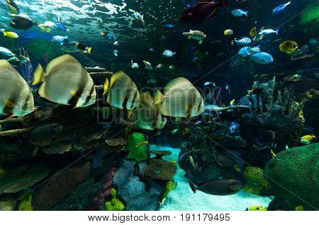 Exotic marine animals swimming in an aquarium