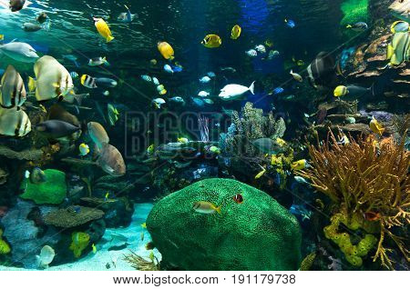 Exotic marine animals swimming in an aquarium in Toronto Canada