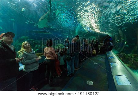 People watching the fish in the aquarium in Toronto Canada