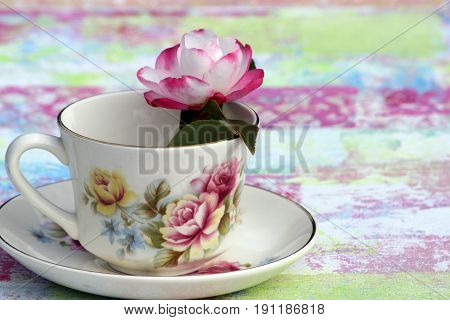 Beautiful teacup and saucer with pink and white Camellia
