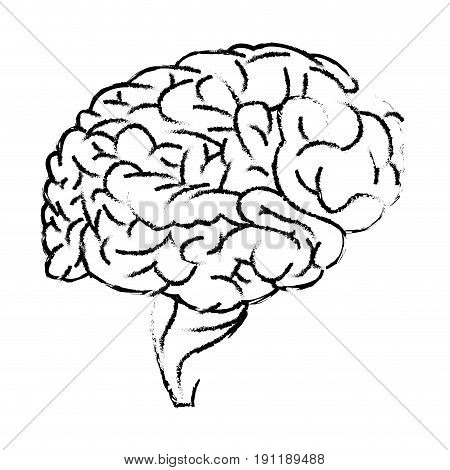 human brain organ medical healthcare science vector illustration